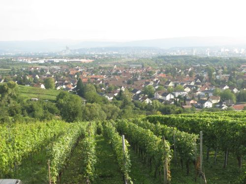 Vineyards near Constance